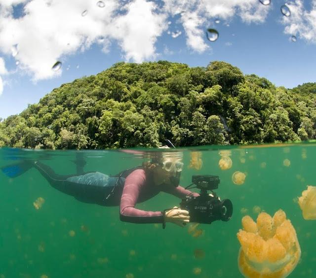 Danau Kakaban Kalimantan Timur