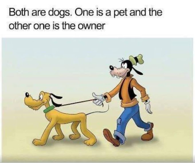 Both are dogs