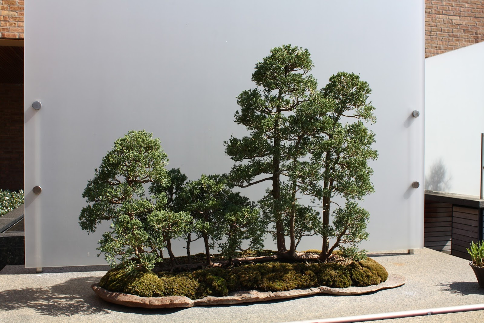 Impressive Mini Forest Bonsai Tree At Chicago Botanic Garden