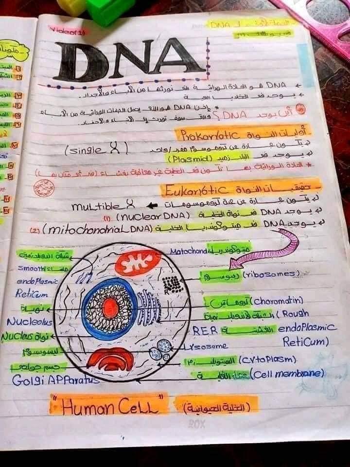 اقوي ملخص DNA تالته ثانوي 1