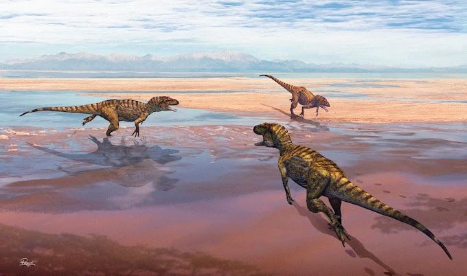 Estudo revela novos dados sobre pegadas de dinossauros carnívoros do Jurássico no Cabo Mondego