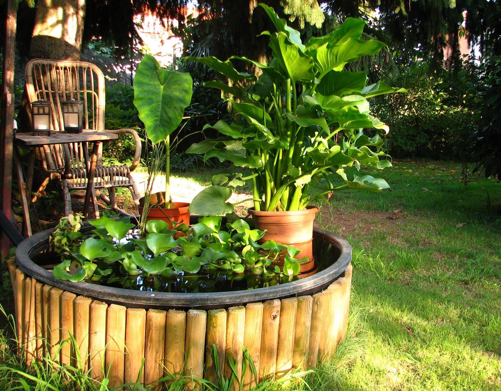 L 39 orto dei colori cavoli lattughe pomodori fucsie e pere for Piante acquatiche laghetto