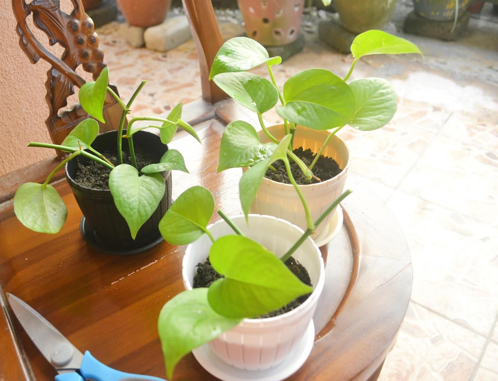 Pasu Comel Dari Kedai Eco Untuk Deko Rumah Nieyl S Life Story