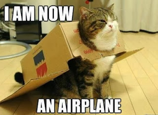 lol cats airplane