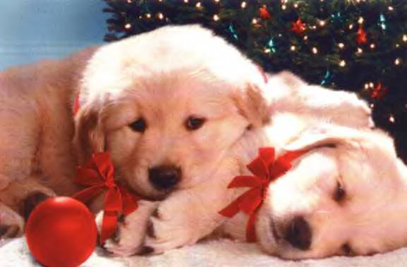 Free Christmas Wallpapers: Christmas Puppy Wallpapers