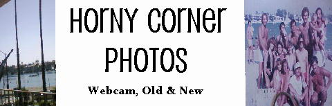 New & Old School Horny Corner Photos