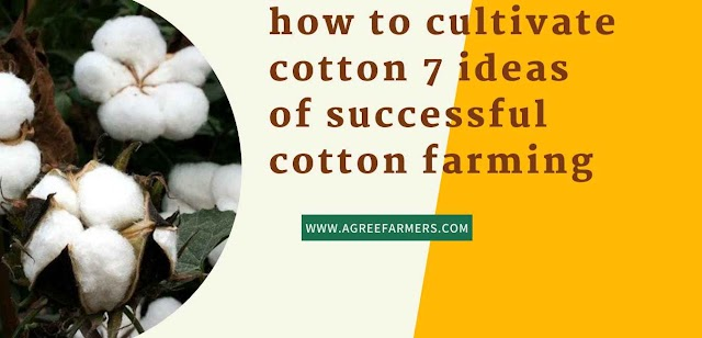 how to cultivate cotton 7 ideas of successful cotton farming