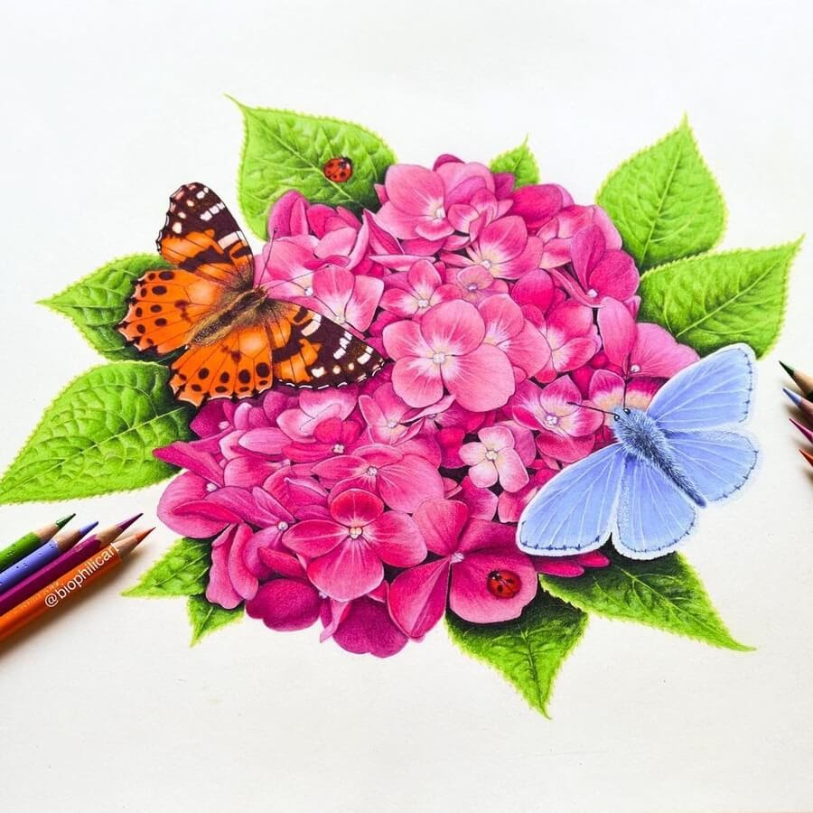 05-A-butterfly-and-a-moth-Sallyann-www-designstack-co