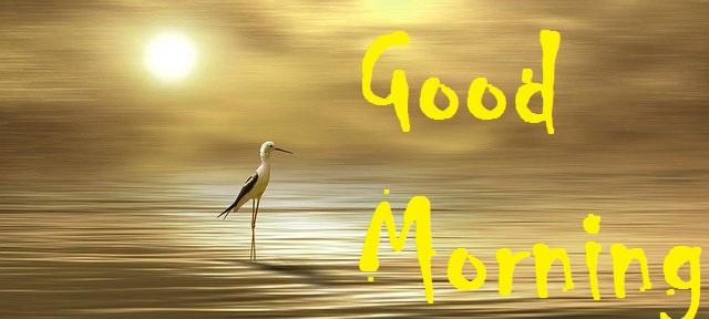 Beautiful good morning bird with sunrise image