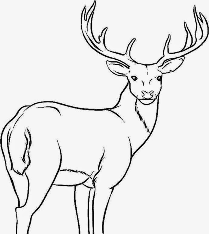 deers coloring pages - photo#26