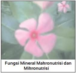 Fungsi Mineral Makronutrisi dan Mikronutrisi pada Tumbuhan