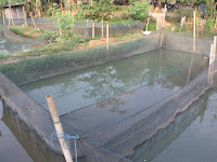 Penggunaan Jaring Waring Untuk Agribisnis Perikanan Di Rawa-Rawa