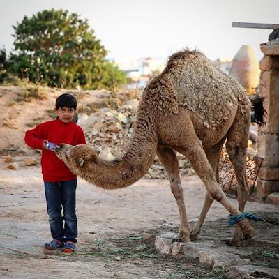 Niño y camello en Djerba
