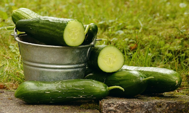 How To Start a Lucrative Cucumber Farming Business in Nigeria