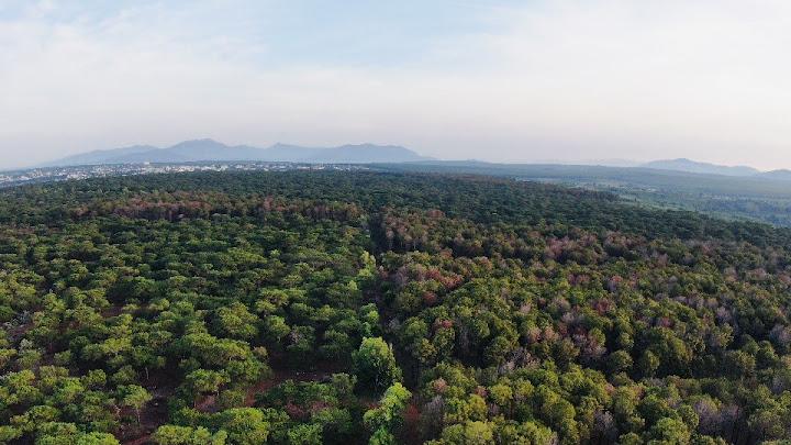 Chính Phủ mới liệu có khá hơn trong việc bảo vệ rừng và chống biến đổi khí hậu