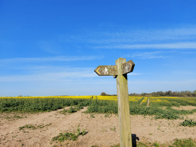 A close up of a wooden footpath sign against a blue sky with a field of yellow rape flowers in the background