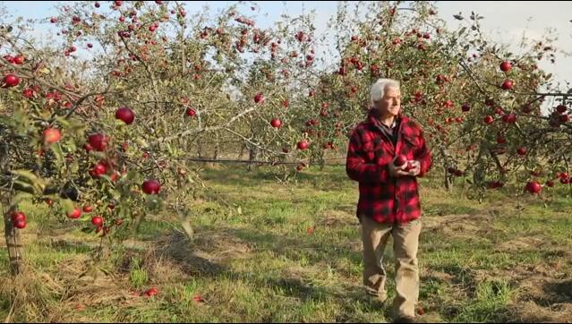 小龜的筆記: 樸門蘋果爺爺-如何以樸門的方法種植果樹