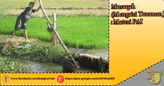 Musaqah (Mengairi Tanaman) : Materi PAI