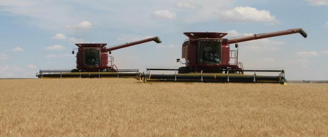 Mercado del trigo y agricultura