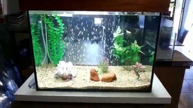 Cara Menciptakan Aquarium Sederhana Unik Untuk Ikan Hias