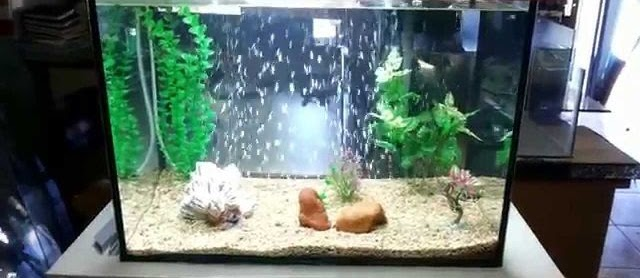 Cara Membuat Aquarium sederhana Unik untuk Ikan Hias