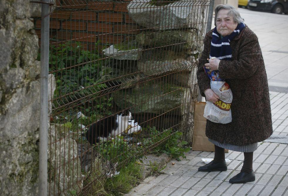 [EJEMPLAR] Conoce a la abuela que se ha convertido en un ángel para los gatos sin hogar en las calles