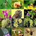 अंतर्राष्ट्रीय जैविक विविधता दिवस (22 मई): धरती की सुंदरता के लिये उसकी विविधता भी आवश्यक है