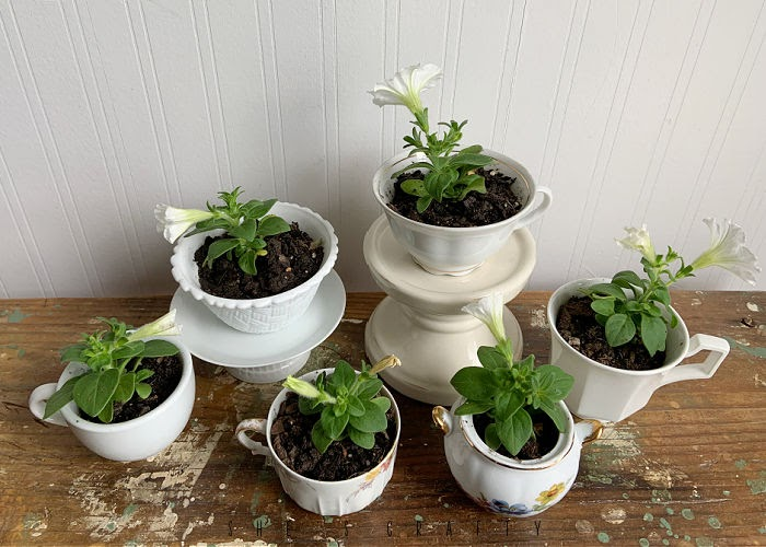 How to plant flowers in tea cups.