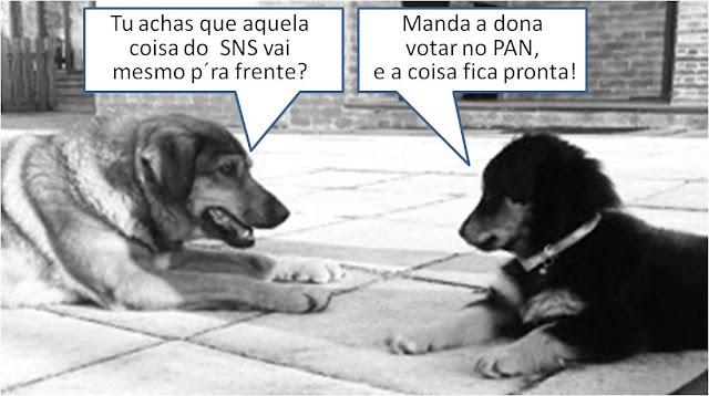 Espera-se a todo o momento um manifesto de apoio da Ordem dos Veterinários ao projecto do PAN.... e os donos dos cães votarão ao lado dos donos dos gatos!
