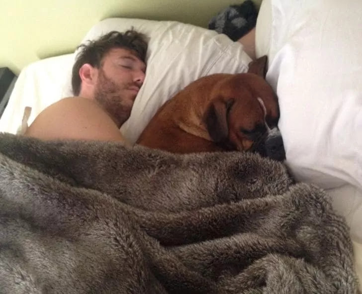 18 Loving Pets That Truly Stole Their Owners' Hearts