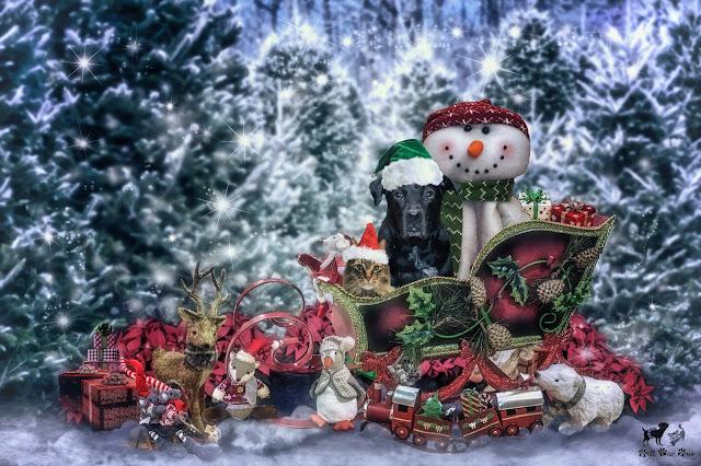 Santa's Sleigh (©Jenny Bell @ Bell Fur Zoo)