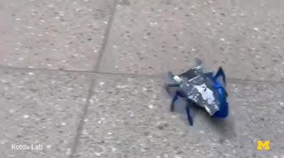 Baterias biomórficas podem significar grandes aumentos no tempo de execução para robôs pequenos