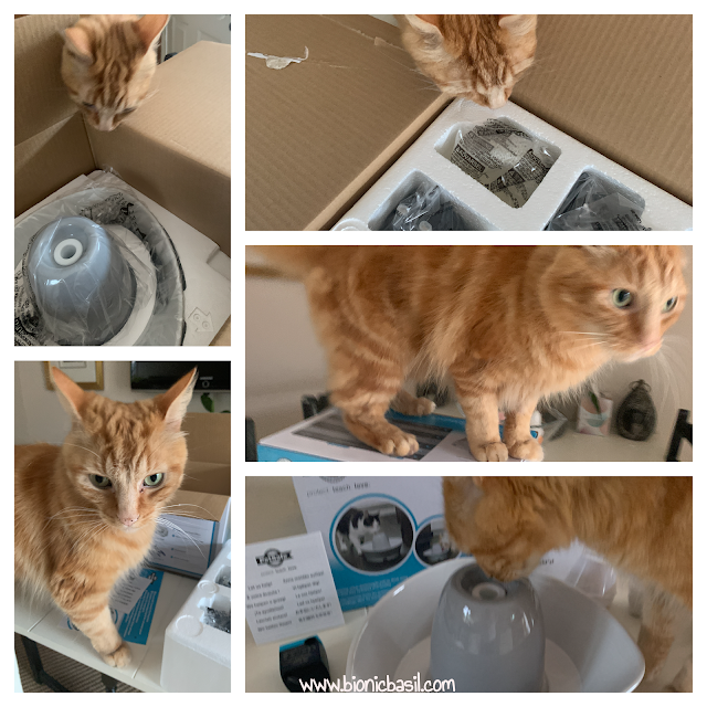 What's In The Box ©BionicBasil® The PetSafe Streamside Ceramic Pet Fountain with Fudge