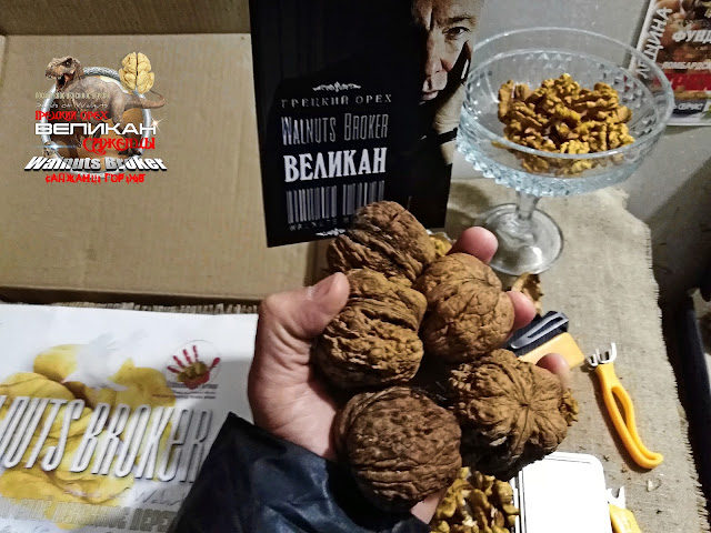 купить саженцы грецкого ореха великан в украине