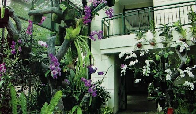 Sulap Pekarangan Rumah Menjadi Indah Dan Hijau Dengan Taman teduh
