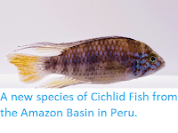 http://sciencythoughts.blogspot.co.uk/2014/10/a-new-species-of-cichlid-fish-from.html