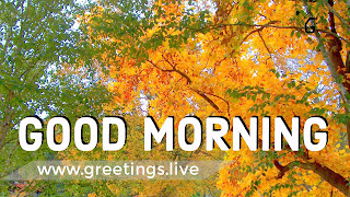 Yellow and green colour leaf branches white colored good morning text