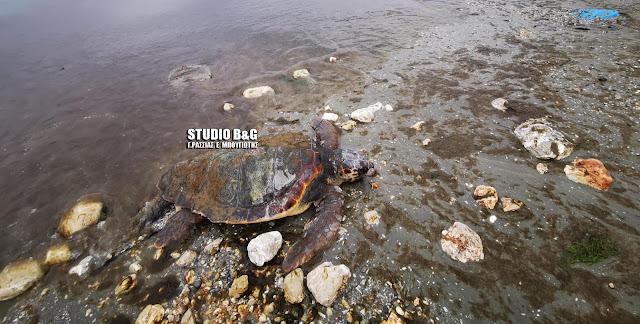 Αδιανόητο: Έξη νεκρές θαλάσσιες χελώνες σε παραλία της Αργολίδας (βίντεο)