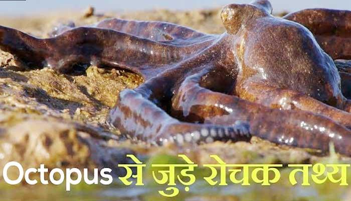 ऑक्टोपस से जुड़े अनोखे रोचक तथ्य - Octopus Facts in Hindi
