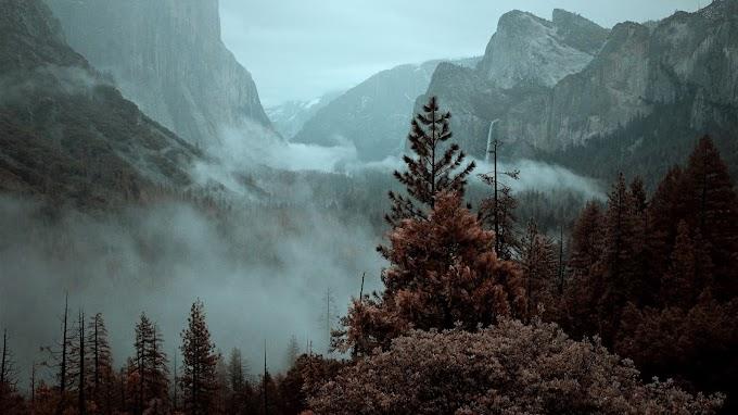 Montanhas, Árvores, Nevoeiro, Natureza
