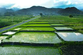 merupakan salah satu pertanian yang mulai di kembangkan di Indonesia selain karena hasiln Ciri Ciri Pertanian Organik