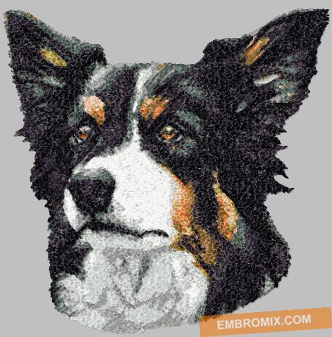 http://www.embromix.com/animals-world/dog-breeds/border-collie/prod_4961.html