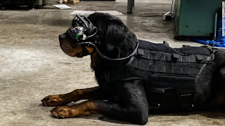 U.S. Military Trials Reality Googles For Dogs