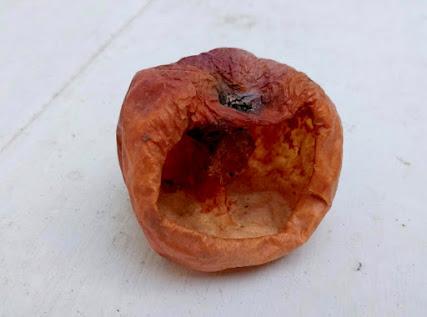 Skull-like apple husk