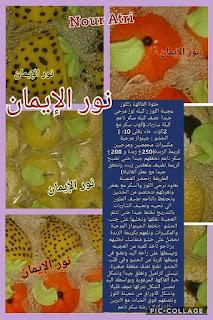 حلويات ام وليد للاعراس.oum walid halawiyat 116