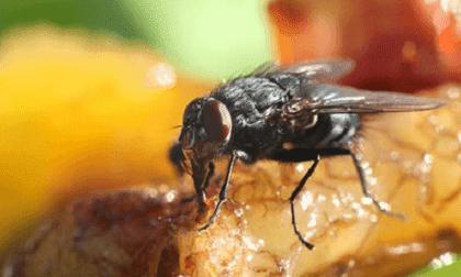 Tips Mencegah Agar Lalat Tidak Datang Kembali