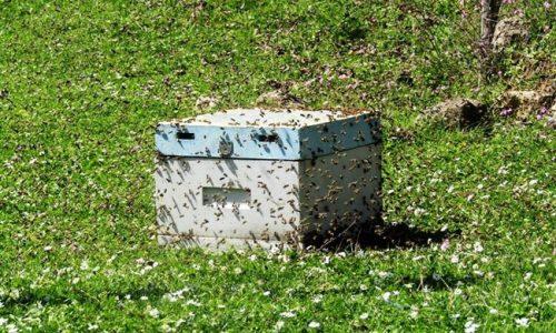 Διαστάσεις φαίνεται ότι παίρνει η κλοπή κυψελών με μέλισσες στην περιοχή των Ιωαννίνων. Το τελευταίο διάστημα κλοπές αναφέρθηκαν από την περιοχή της Δραμπάτοβας.