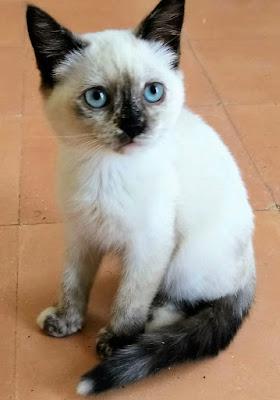 GATITA - KATZE - CAT