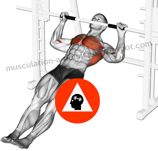 exercice musculation biceps tractions horizontales