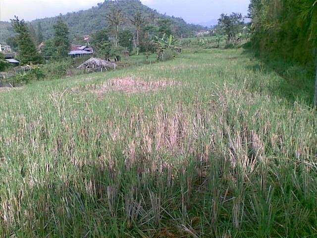 Foto(5051) Jual Tanah   tanah di jual, Lokasi strategis di Cipanas Jual tanah di cipanas jual tanah di puncak